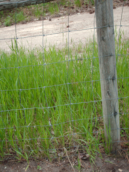 disappearing-fence-11