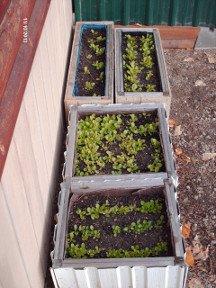 salad-garden-1-4x
